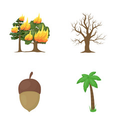 Burning tree palm acorn dry treeforest set vector