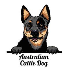 peeking dog - australian cattle dog - dog breed vector image