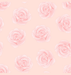 Pink rose - rosa on pink background vector