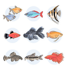 popular aquarium fishes part 2 vector image