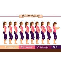 Pregnancy stages flat Pregnant woman and birth vector image vector image