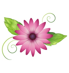 A pink flower with leaves vector