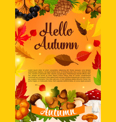 hello autumn poster template of fall season leaf vector image