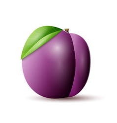 Plums icon vector