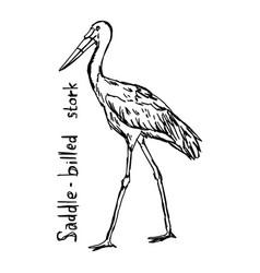 saddle-billed stork vector image