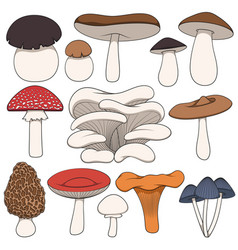 set color images mushrooms vector image