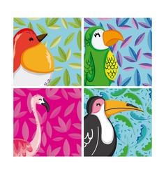 set exotic birds vector image
