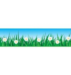 seamless grass with daisies vector image