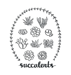 Succulent set cute Plants Sketched objects vector image vector image