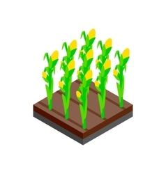 Growing tulips isometric 3d icon vector image