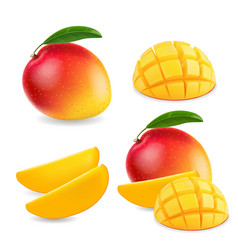 mango realistic fruit whole and pieces vector image