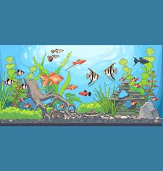 Rectangular horizontal aquarium vector
