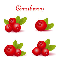 Set of forest cranberry with leaves vector