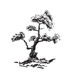 hand-drawn tree pine black and white realistic vector image