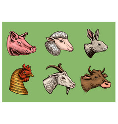 Farm animals head a domestic pig goat cow vector