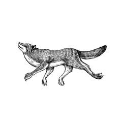 gray wolf gray wolf a predatory beast wild vector image