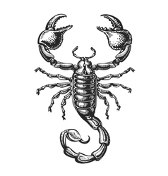 Hand drawn sketch of scorpion Tattoo animal vector image