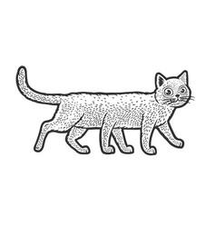 Six legged cat sketch vector