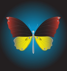 Butterfly at night background vector