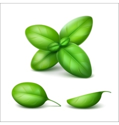 Green fresh basil leaves close up on background vector