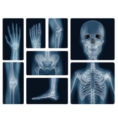 human bones realistic x-ray shots vector image