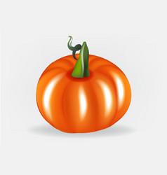 pumpkin logo design vector image