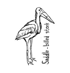 saddle-billed stork vector image