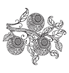 Orange and leaves hand drawn in black and white vector image vector image