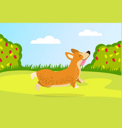 a little dog runs for a walk in garden rose vector image