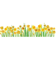 Border with multicolor daffodilses vector
