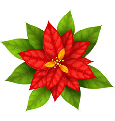 Christmas Star flower vector