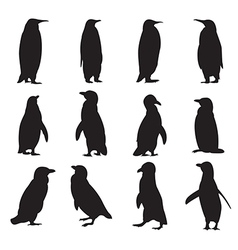 Collection of penguins silhouettes vector image