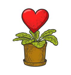 Heart love grown as houseplant sketch vector