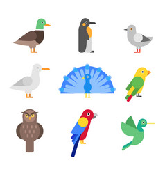 stylized of different birds vector image