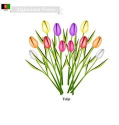 Tulip Flowers The Popular Flower of Afghanistan vector image