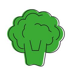broccoli vegetable icon image vector image vector image