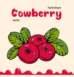 cowberry berries images vector image