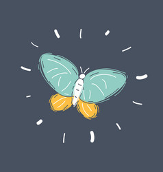 sketch hand drawn butterfly vector image