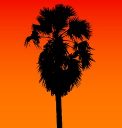 Sugar palm silhouette vector image