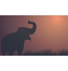 Landscape elephant in fields silhouettes vector image vector image