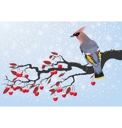 Bird on cherry branch vector image vector image