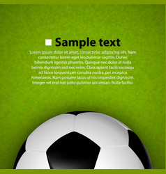 soccer ball on the field vector image