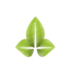 drawing green leaves natural vector image