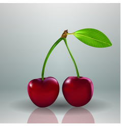 Fresh red cherry food berry isolated background vector