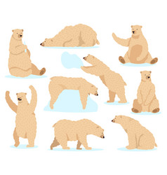 polar white bear arctic snow bear cute north vector image