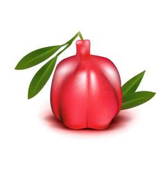 Realistic ackee 3d aki blighia sapida fruit vector