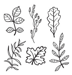 Silhouettes leaves and branches vector