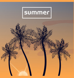 summer sunset with palm trees vector image