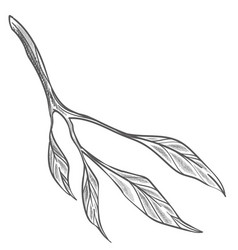 Tropical floral decor bush branch with leaves vector