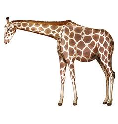 A tall giraffe vector